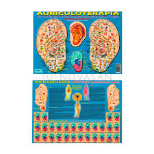 Auriculoterapia El Poder Curativo A4