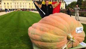 Heaviest Pumpkin Ever by Belgium Now Holds The World Record For Biggest Pumpkin