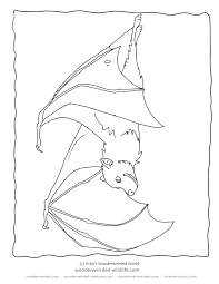 Bat Coloring Pages Fruit Pictures From Our Collection Of Wildlife