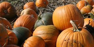 Griffin Farms Pumpkin Patch by 25 Pumpkin Patches In Alabama You Need To Visit This Fall