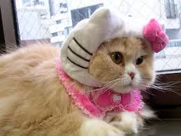 kitty cat kitty cat more hello kitty hell