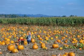 Pumpkin Patch Near Bay Area by Best Nyc Pumpkin Patches