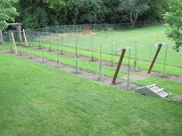 How To Build A Grape Trellis Strenght — Farmhouse Design And Furniture Small Plot Intensive Gardening Tomahawk Permaculture Backyard Vineyard Winery Grapes In Your Own Backyard Lifestyle Bucks County Courier More About The Regent Winegrape Growing Your Grimms Gardens Trellis With In The Yard At Home How To Grow Grapes Steemit Seedless Stark Bros Grape Orchards Pinterest Orchards Seattle Wa Youtube Grown Grape Vine And Trellis Stock Photo Royalty First Years Goal