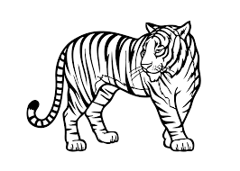 Zoo Animal Coloring Pages Tiger Printable