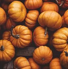 Lehner Pumpkin Farm by 10 Perfect Ohio Pumpkin Patches U2014 Ohio Explored