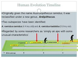physical evolution of human species ppt
