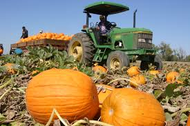 Apple Pumpkin Picking Syracuse Ny by 11 Fun Things To Do In Upstate Ny During Fall