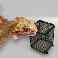 Reptile Heat Lamps Safety by Vivarium Bulb Guard Reptiles Ebay