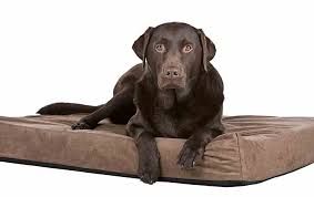 Chew Proof Dog Beds by Best Indestructible U0026 Chew Proof Dog Bed Reviews In 2017