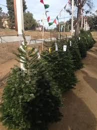 Bonita Pumpkin Patch Sweetwater Road by Pinery Christmas Trees 5354 Sweetwater Rd Bonita Ca Mapquest