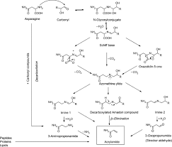 Reaction Scheme For Acrylamide Formation In The Maillard