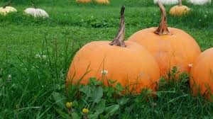 Hunter Farms Pumpkin Patch Olympia Wa by 9 Best Pumpkin Patches To Explore This Fall Seattle Refined