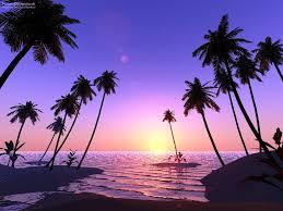 Palm Tress Beside Tropical Ocean