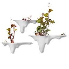 hydrokulturpflanzen mehr als 100 angebote fotos preise