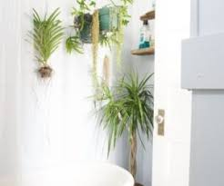 Plants For Bathroom Without Windows by Freestanding Or Built In Tub Which Is Right For You