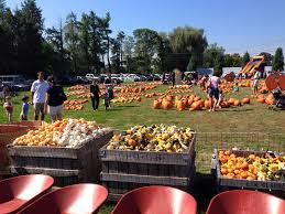Pumpkin Patch In Long Island New York by 6 Pumpkin Patches Near Nyc You Can Reach By Public Transit Curbed Ny