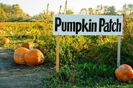 Pumpkin Patch Homer Glen Il by Will County Fall Fest Pumpkin Farms Corn Mazes Hayrides
