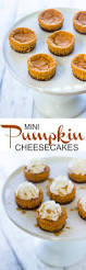 Gingersnap Pumpkin Pie Cheesecake by Mini Pumpkin Cheesecakes With Gingersnap Crust Gimme Delicious