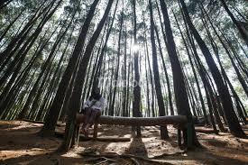 Duduk Santai Di Hutan Pinus Mangunan