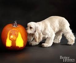 Boston Terrier Pumpkin Pattern by 10 Astonishing Dog Pumpkin Carvings U2013 Iheartdogs Com
