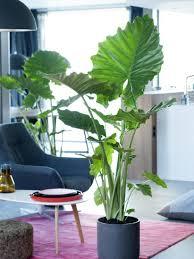 pfeilblatt pflanzenfreude