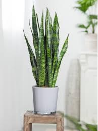 luftreinigende pflanzen diese pflanzen verbessern das