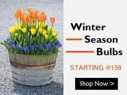 buy plants seeds and tree india s nursery garden