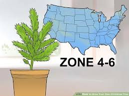 Image Titled Grow Your Own Christmas Tree Step 1