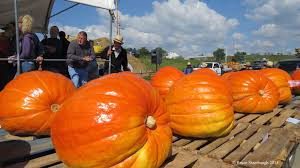 Pumpkin Patch Harrisonburg Va by October 2016 Roadkill Crossing