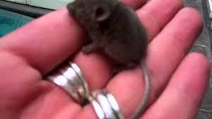 le souris sur la route