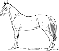 Horse Coloring Book Pages For Kids