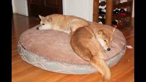 Kirkland Dog Beds kirkland signature dog bed prices youtube