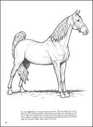 Big Book Of Horses Coloring