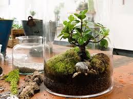 garten im glas mini biotop fürs wohnzimmer gestalten