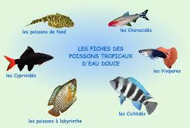 poisson eau douce aquarium tropical poissons tropicaux d eau douce aquariophilie aquariums