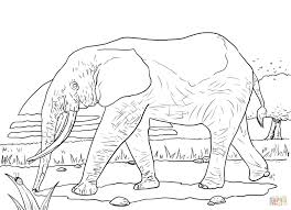 Click The African Forest Elephant Coloring Pages To View Printable