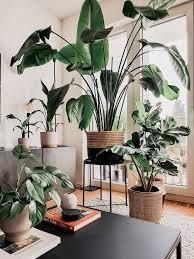 jungle im herbst exotische tropenpflanzen sense