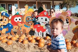 Flower Mound Pumpkin Patch Flower Mound Tx by Flower Mound Pumpkin Patch This Amusing Life