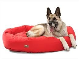 Kong Chew Resistant Dog Bed by Living Room Marvelous Non Chewable Dog Bed Indestructible Dog