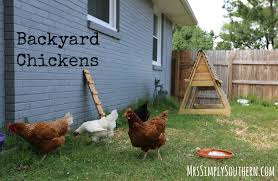Backyard Chickens | Mrs Simply Southern Page 4 Better Eggs From Backyard Chickens Without Grain Garden Culture Caes Newswire Are A Thing 10 Reasons You Need To Start Raising Your Own Today Chicken Nutrition What Do Backyard Chickens Eat For Large And Beautiful Photos Photo Breeds With Blue Feet 1000 Ideas About Cochin On Best Timber Creek Farm Keeping Burkes Agriculture Food