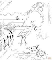 Dibujo De Animales La Selva Para Colorear Y Pintar Cakepinscom