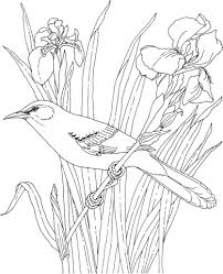 Click To See Printable Version Of Mockingbird And Iris Tennessee State Bird Flower Coloring Page