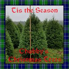 Pumpkin Patch Chesapeake Va by Chubby U0027s Christmas Trees And Pumpkin Festival Home Facebook