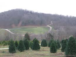 Pumpkin Patches Near St Peters Mo by Where To Get A Real Christmas Tree In The St Louis Area