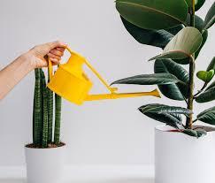 100 Indoor Watering Can Plastic 1501 Handy