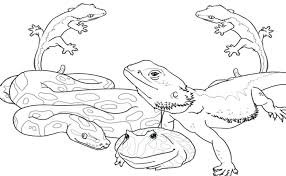 Wild Animals Coloring Pages Printable Print And