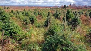 Maine Christmas Tree Farm For Sale