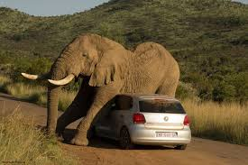 Pilanesberg Game Reserve North West Province South Africa Funny AnimalsWild