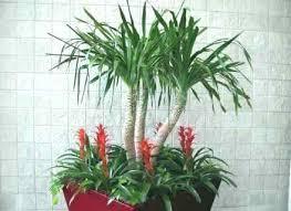 Low Light Indoor Plants Great Flowering Indoor Plants For Low