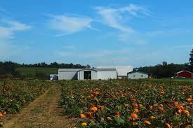 Lehner Pumpkin Farm by Top Spots 10 Best Pumpkin Patches In Central Ohio Nbc4i Com